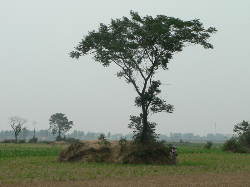 Ah Feng next to the tree and mound, SE of the confluence