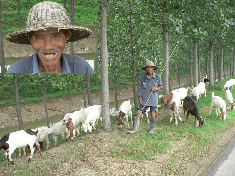 Goatherd and his charges; inset: his amiable smile
