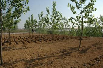#1: General area - ready for peanut planting
