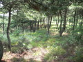 #3: Wooded area