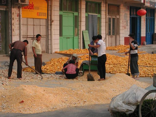 Processing the corn in nearby Ma Zhong Township