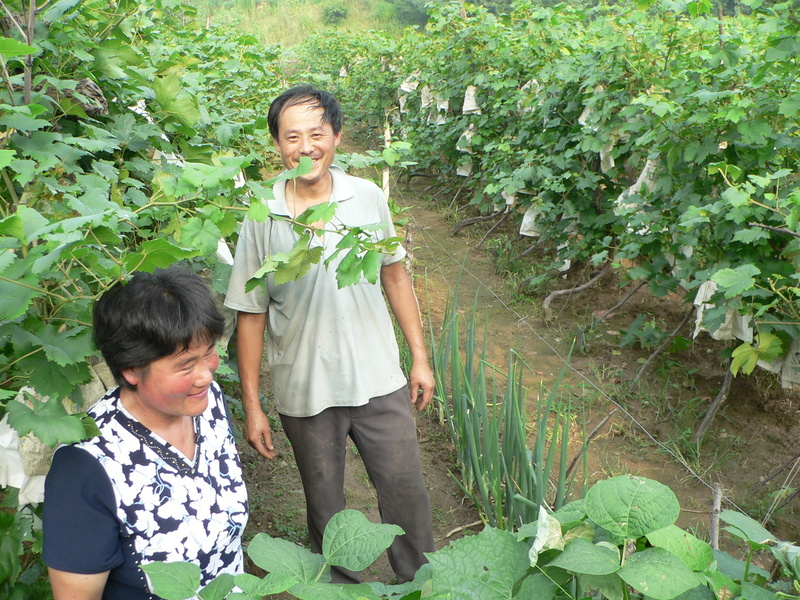 Mr Li and his wife in the vineyard, with the confluence just to the right of Mr Li