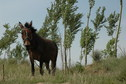 #7: A lone mule near the confleunce point
