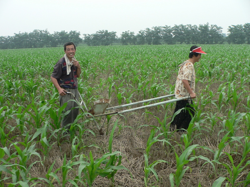 Farmers injecting the ground with plant food pellets