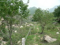 #6: Sheep trail leading up the valley
