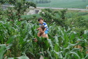 #4: Targ and Andy traversing the cornfield
