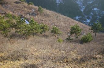 #1: N41E118就在中间那棵松树旁/N41E118 near that pine in the middle