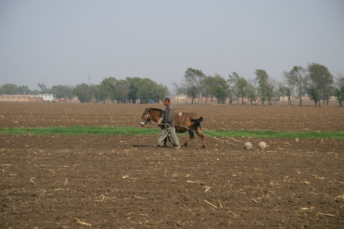 Traditional way of farming