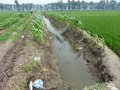 #3: Frog trap in the ditch beside the track