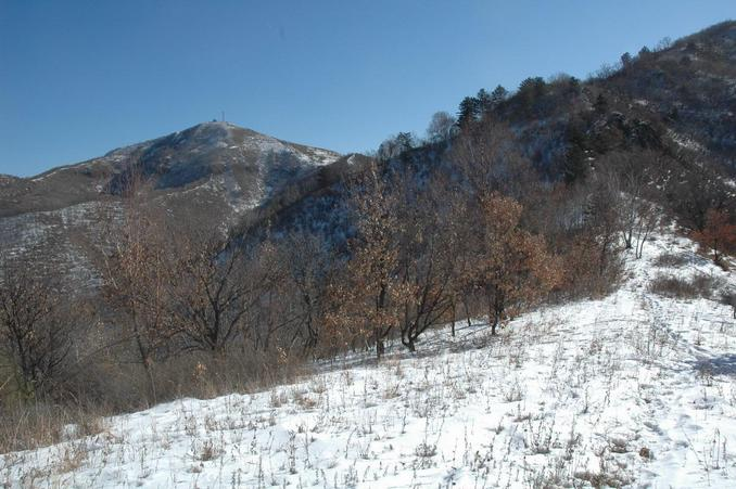View of CP from the ridge - located on the shadded slope behind the trees - 120 meters away