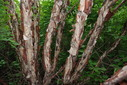 #9: Interesting Bark