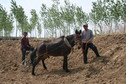 #6: Native people working with horse