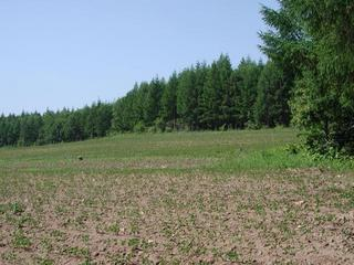 #1: The CP located between the field and the forest