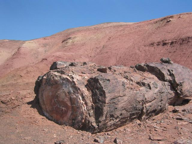 Petrified forest park is closest significant landmark
