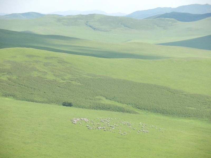 Herd of Sheep from the Top of a Mountain