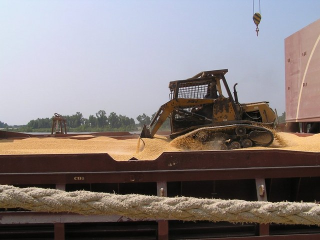 A full cargo hold of corn is levelled even