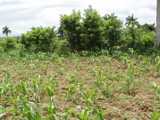 Confluence where the field ends