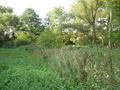 #3: View south (nettles and creek to the right)
