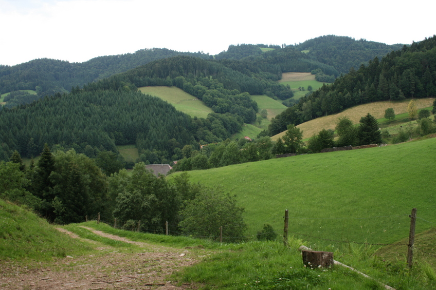 View of typical Blackforest landscape 100 m Northeast outside the forest