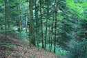 #3: View eastward - forest road in dense forest