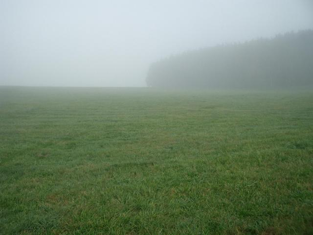 View North: Meadows and a wood