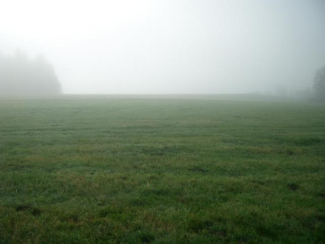 View South: meadows and trees in the mist