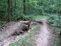 #3: Downhill bike path with a jump over a small creek