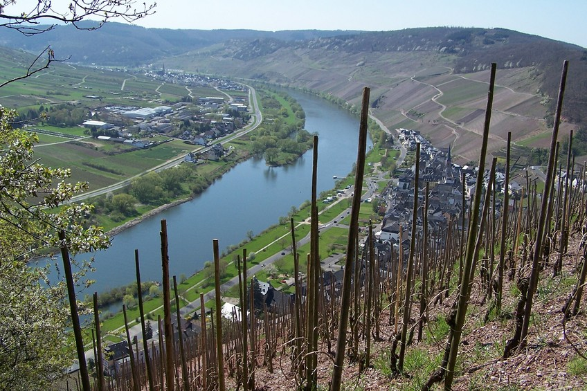 Vineyards overlooking the Moselle river