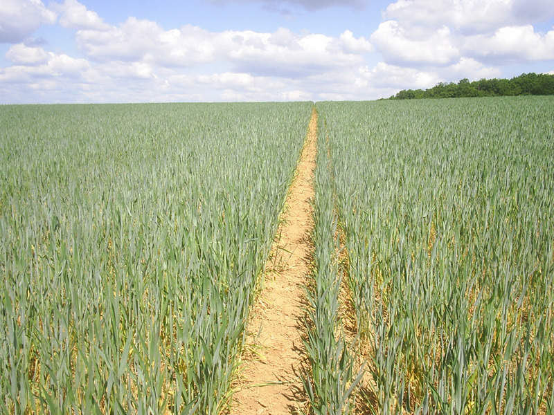 Track in the field leading to the CP