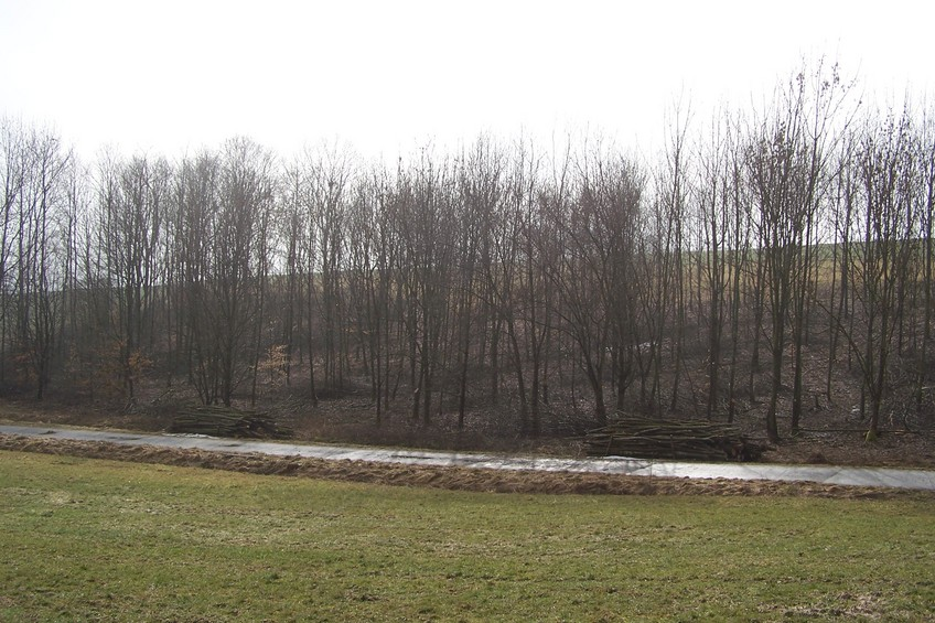 General view of the confluence (towards S, ca. 100 m away)