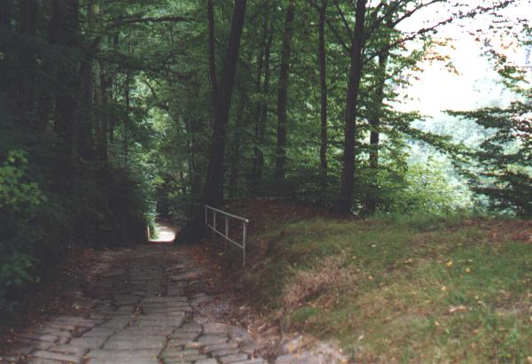"Steep way through the ""Lohmen Klamm"""