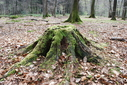 #7: Stump at the CP