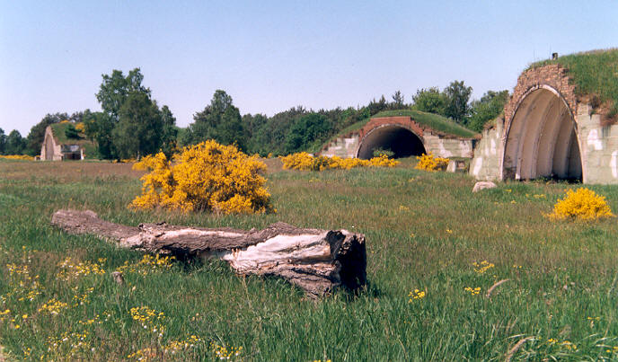 Some beautiful flowering aircraft shelter near airfield