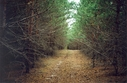#6: Nearby forest path (ca. 70 m from the confluence)