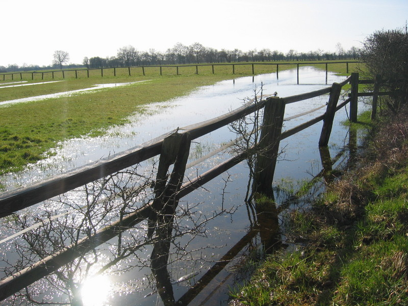 A Flooded Meadow
