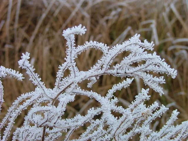 White frost at the fields