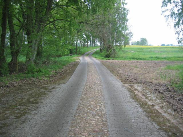 The road to the CP (about 150 m away)
