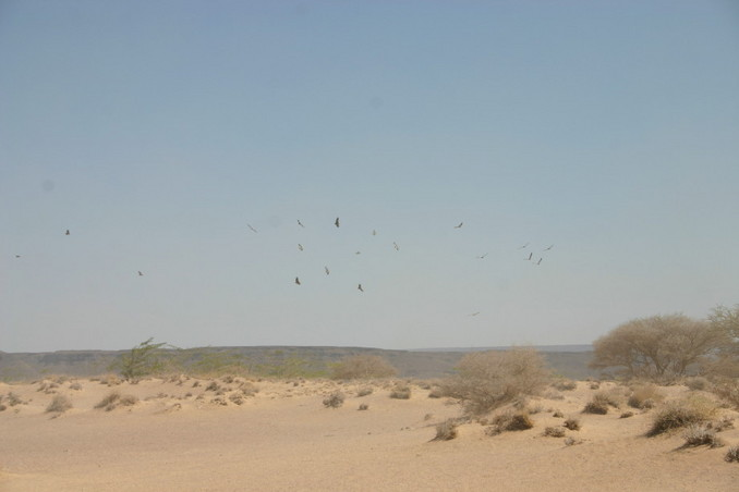 Vultures circling as we make our way across the desert...