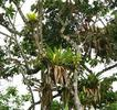 #4: South - Epiphytes in trees