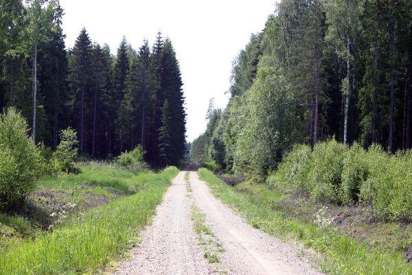 Way to some hundred meters to confluence: Savisaare road.