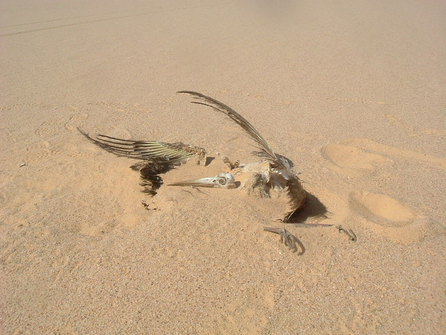Remains of a migrant stork found less than 5 mins after leaving SW for 2.1 km from the Confluence