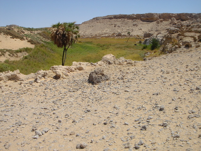 A view of the oasis at Kurkur