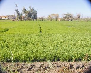 #1: Looking west in direction of the confluence point