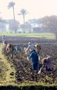 #6: Standard Equipment: A 2 buffalo, 1 bottom plow, complimented by two women spreading seed. It takes 16 passes of the plow to create a plot of land with 15 rows!
