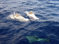 #6: Visited by dolphins