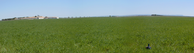 #6: Sea of barley in Albacete - La Mancha