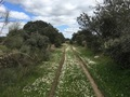 #10: Track to the Confluence with daisies