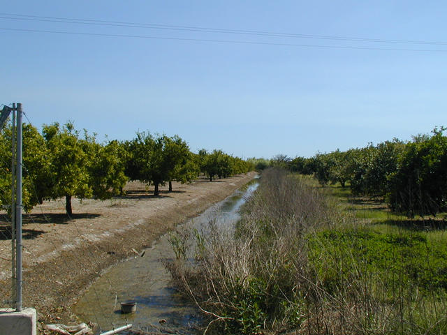 East view with oranges trees.