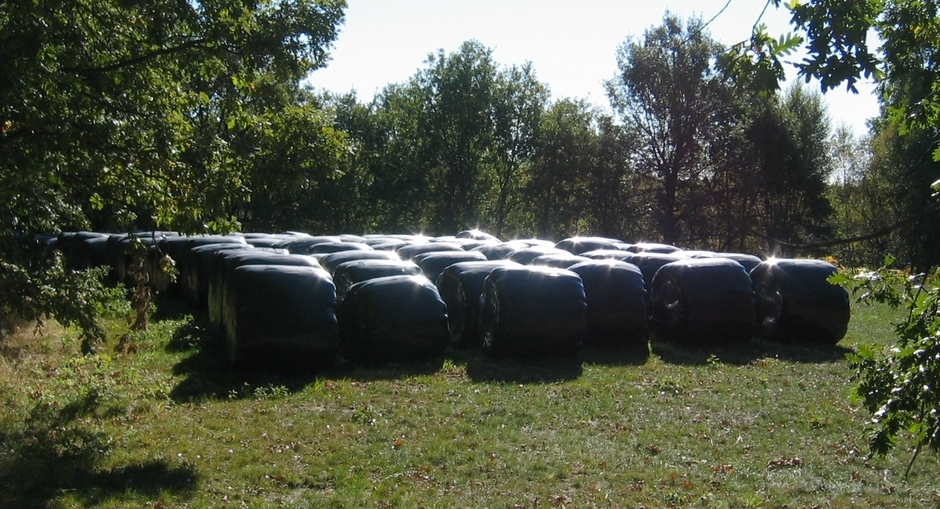 Latex Silage Nearby