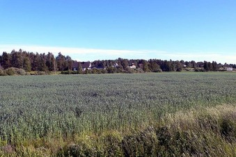 #1: The exact spot is about 200 meters into this field.  This photo is looking directly south.